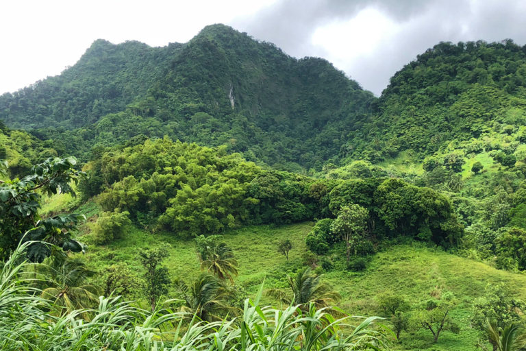 Forest Mountains of St. Vincent