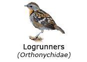Orthonychidae